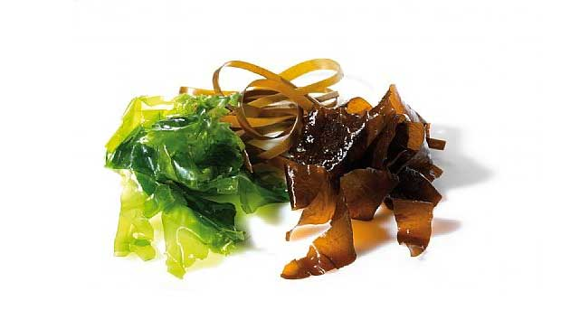 Cannabisanbau-alge