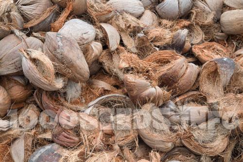 Coco-anbau, anbau auf Cocos, Grow-tipps