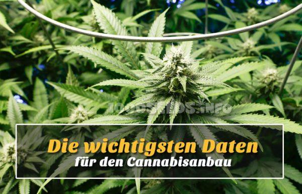 Daten-Cannabisanbau, Parameter