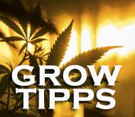Grow-Tipps, Cannabisanbau