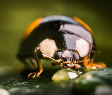 Ladybug Grow cannabis