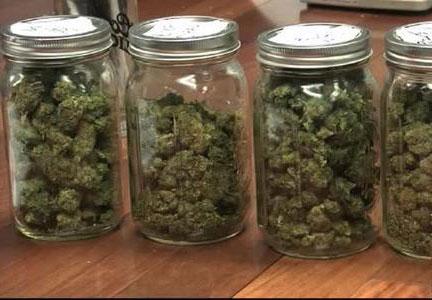 Cannabis-trocknen3