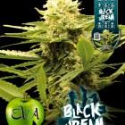 Black-Dream-Eva-Seeds