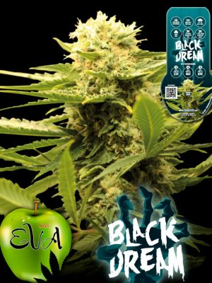 Black-Dream-Eva-Seeds