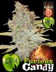 Furious-Candy, Eva Seeds
