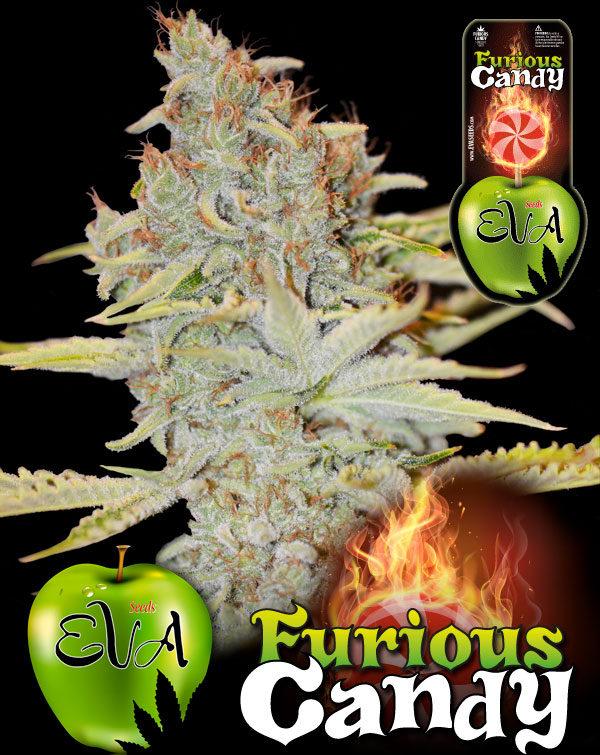 Furious-Candy, Eva Seeds