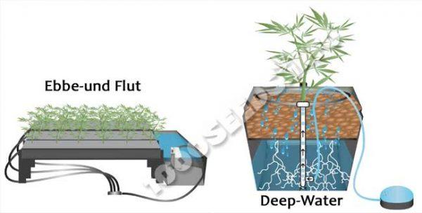 hydroponischer Cannabisanbau