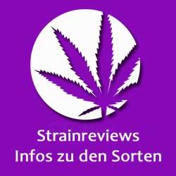 Cannabis-Sortenberichte