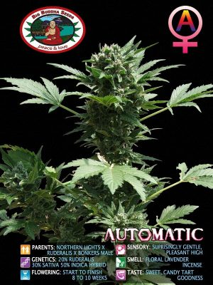 Automatic-Big-Buddha-Seeds