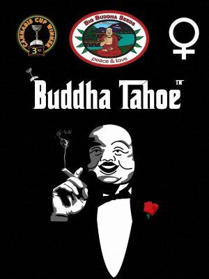Buddha-Tahoe