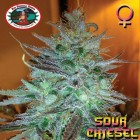Sour-Chiesel