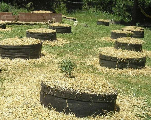Outdoor-Grow in Texpots