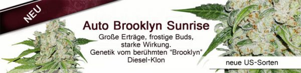 Auto-Brooklyn Sunrise