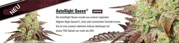 Auto-Night-Queen