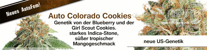 Auto-colorado-cookies