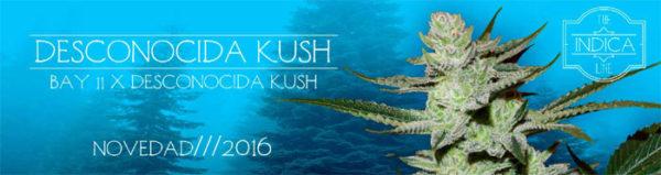 Desconocida-Kush