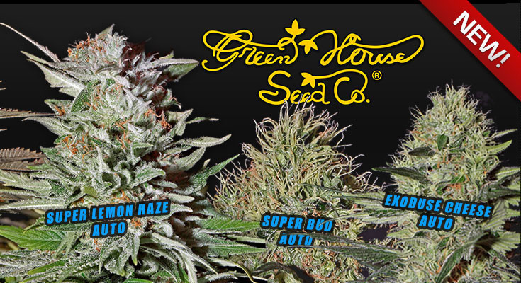 Greenhouse Seeds