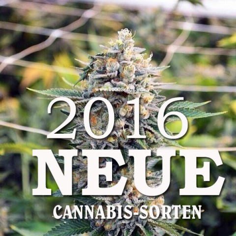 neue Cannabis Strains 2016