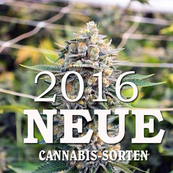 neue Cannabis Strains 2016