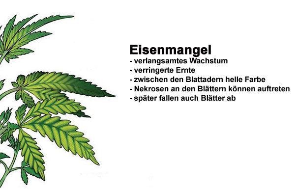 Eisenmangel Cannabis