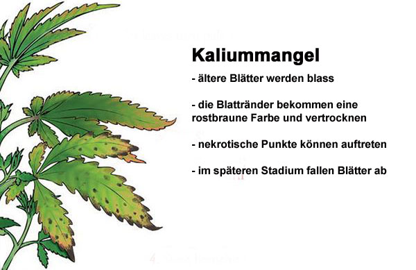 Kaliummangel Grow