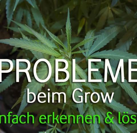 Cannabis Probleme erkennen
