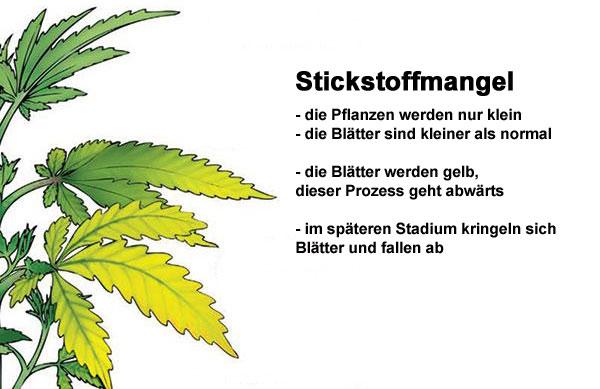 Stickstoffmangel-Cannabis