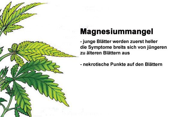 magnesium-Mangel Cannabis