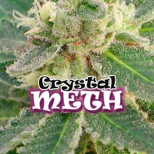 Crystal Meth von Dr Underground