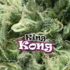 King Kong von Dr Underground