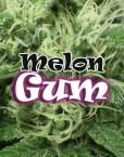Melon Gum von Dr. Underground
