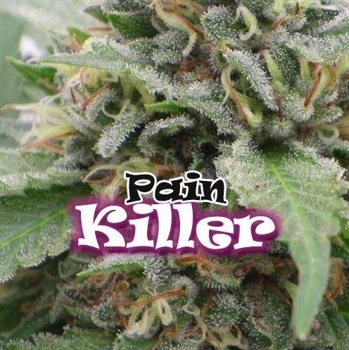Pain Killer von Dr Underground