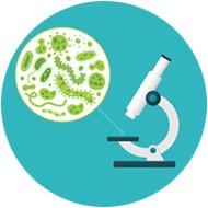 Mikroskope und Lupen