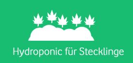 hydroponic-stecklinge