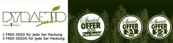 Pyramid Seeds, Free Seeds