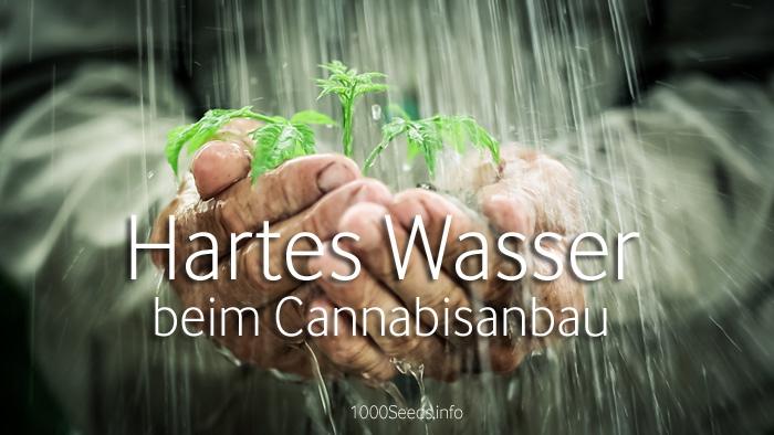 hartes-wasser-Cannabisanbau