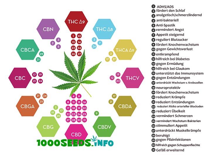 Cannabinoide Effekte