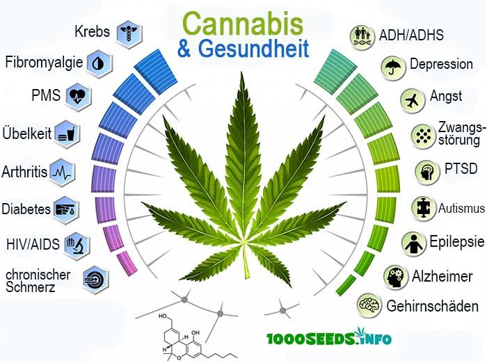 Cannabis gesundheit