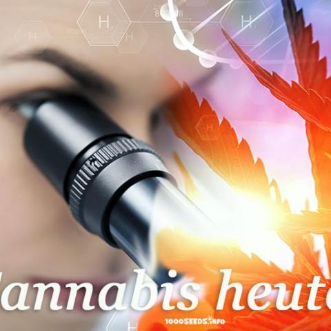 aktuelle Forschung Cannabis