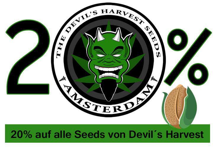 Devils-harvest-20-prozent