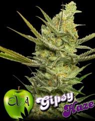 Gipsy Haze von Eva Seeds