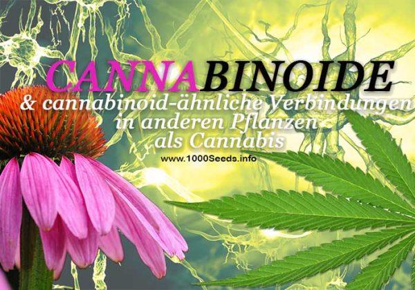 Phytocannabinoide, Cannabis