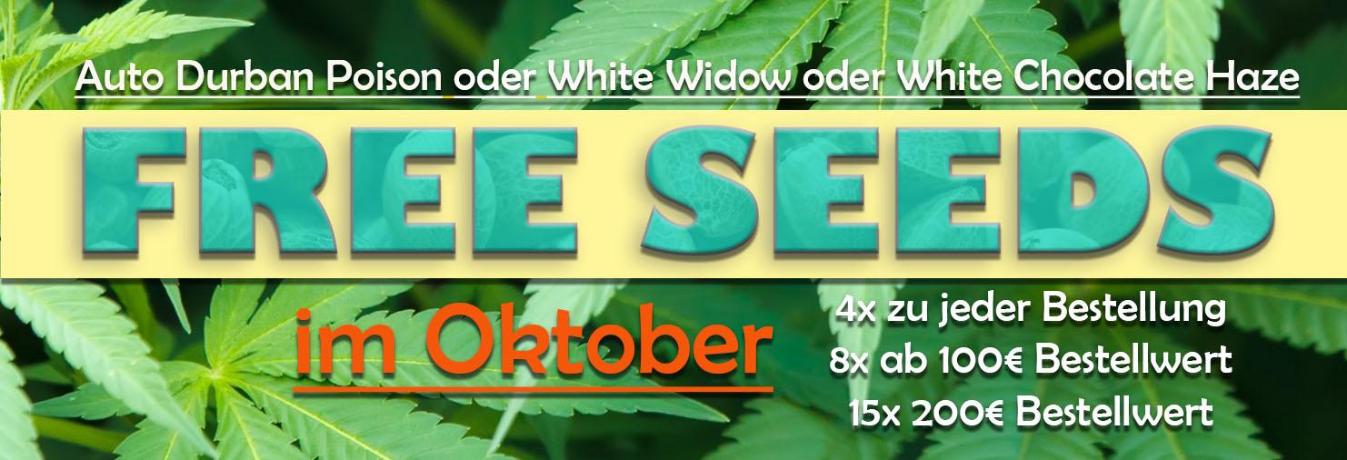 im Oktober gratis Cannabissamen zu jeder Bestellung