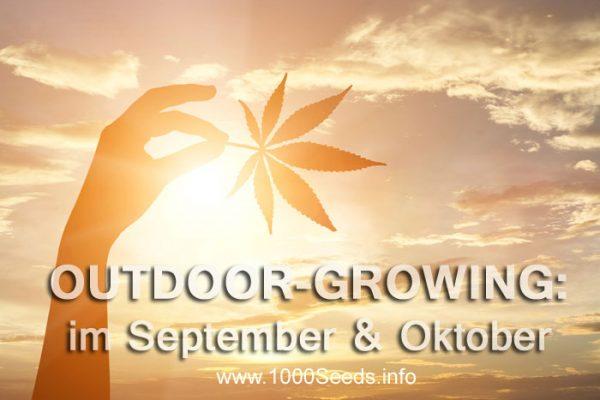 Wissenswertes zum Outdoorgrowing im September und Oktober