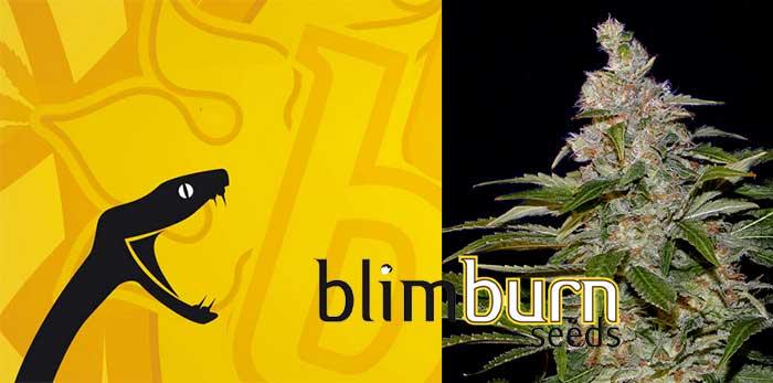 blimburn-seeds-feminized