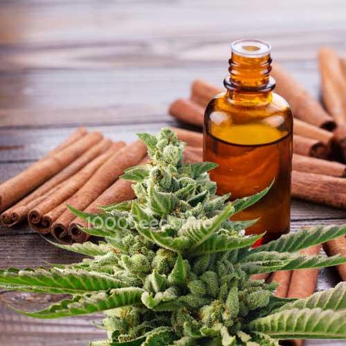 cannabis-zimtoil