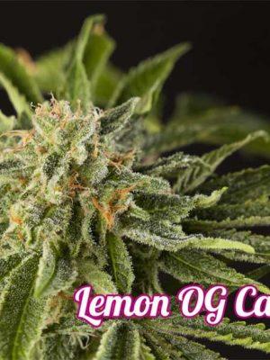 lemon-og-candy