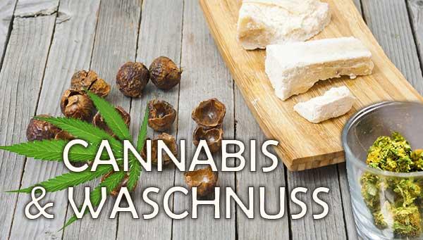 cannabis-waschnuss
