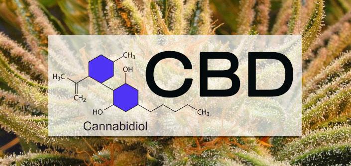 CBD Cannabinoid