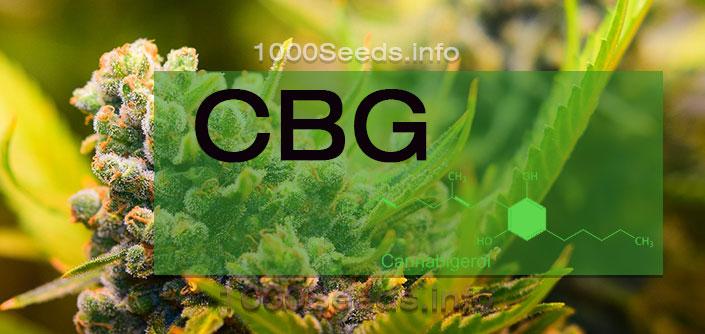 CBG-Cannabinoid